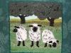 wool-and-dye-works-3-sheep-in-full-frame